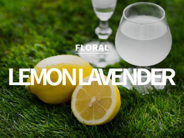 [USA] lemon lavender / 레몬 라벤더